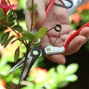 Bloemen- en fruitschaar rood Darlac