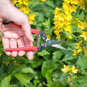 Bloemenscharen