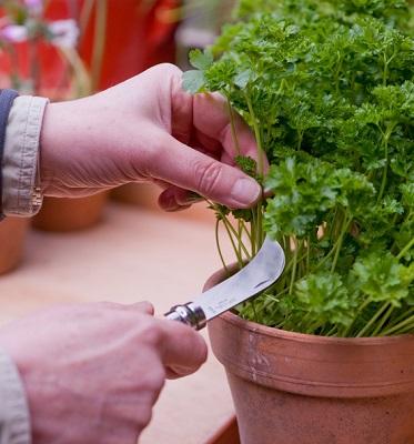 Opinel tuinmes gebogen 19 cm